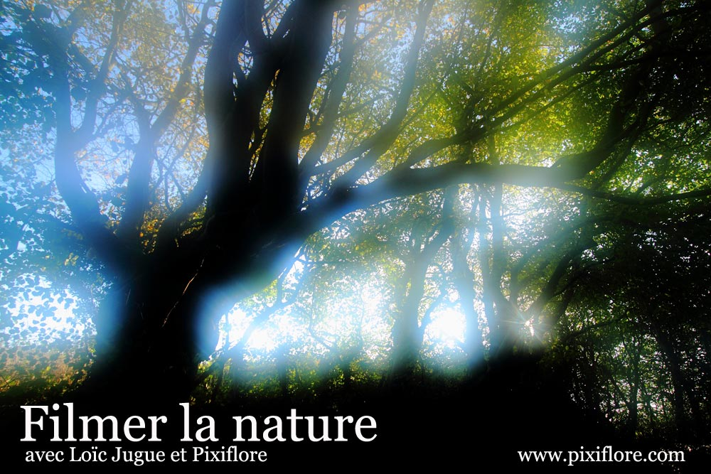 Filmer la nature avec Loïc Jugue et Pixiflore.