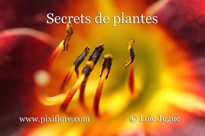 Balade Secrets de plantes avec Loïc Jugue
