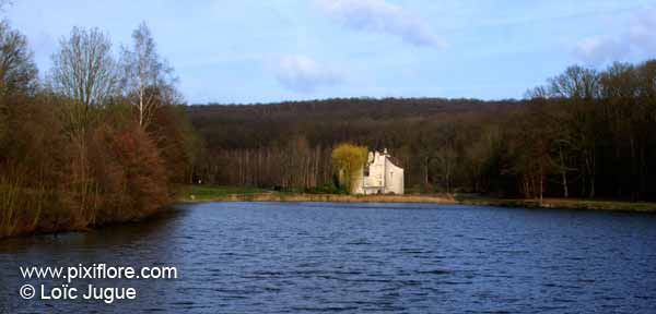 http://www.pixiflore.com/pages/lieux/foret_de_montmorency/photo1.jpg
